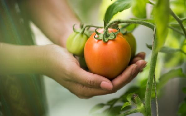 Искусственная трава в сад, в теплицу или в огород помидоры