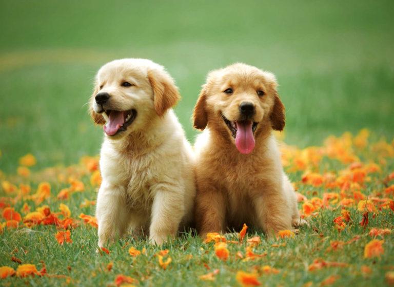 Искусственный газон и условия для Ваших домашних животных в саду