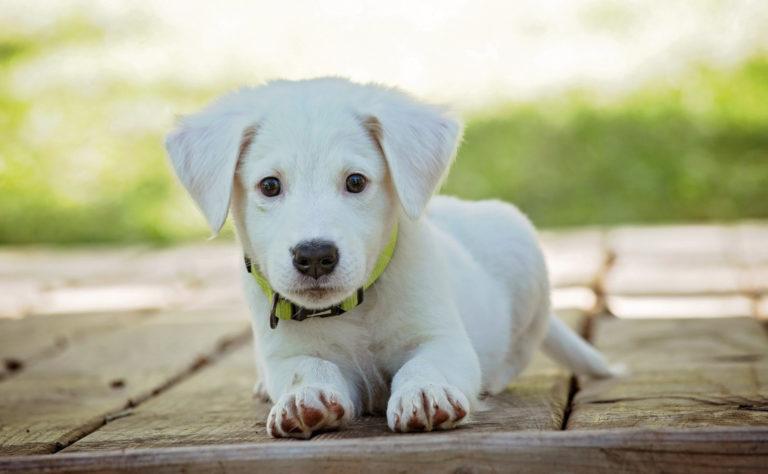 Искусственный газон и условия для Ваших домашних животных.