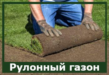 Рулонный газон грассен